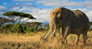 Beste Reisezeit für Kenia