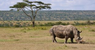 Laikipia National Park