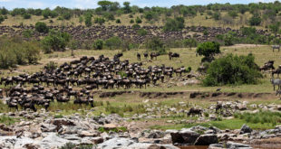 Masai Mara NationalReserve