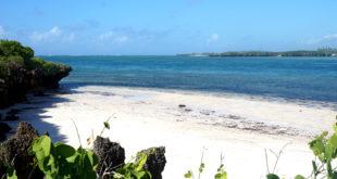 Watamu – Sandstrände, Küstenwälder und ein marines Naturschutzgebiet