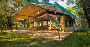 Mara Legends Camp, Zelt