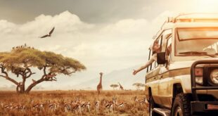 Safari-Tour in Kenia